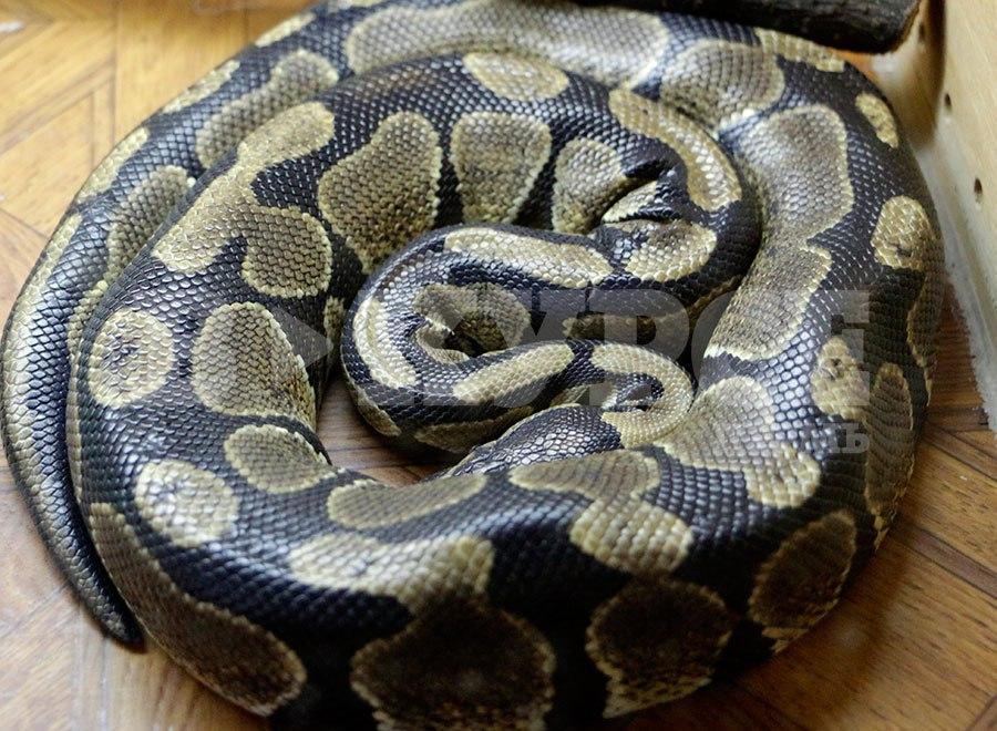 пермяк и змеи 3.jpg