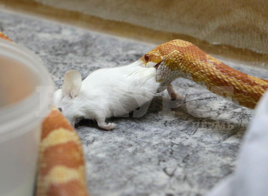 змеи8.jpg