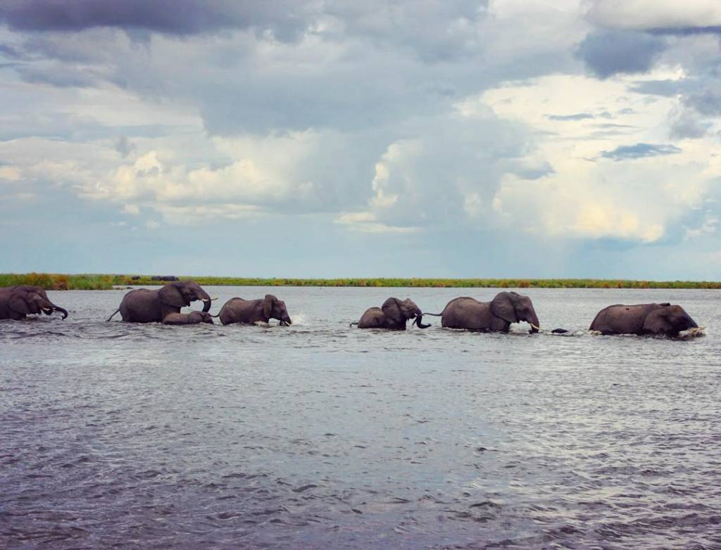 наташа поли слоны.jpg