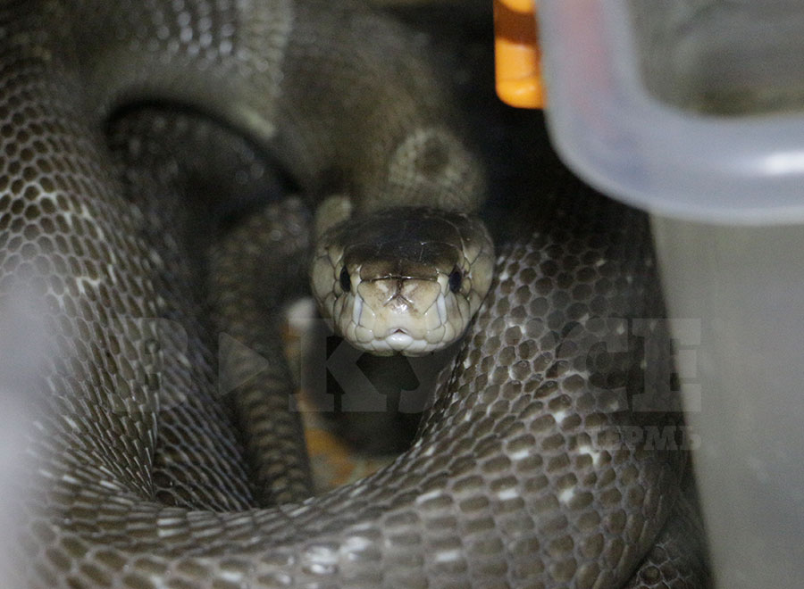 змеи9.jpg